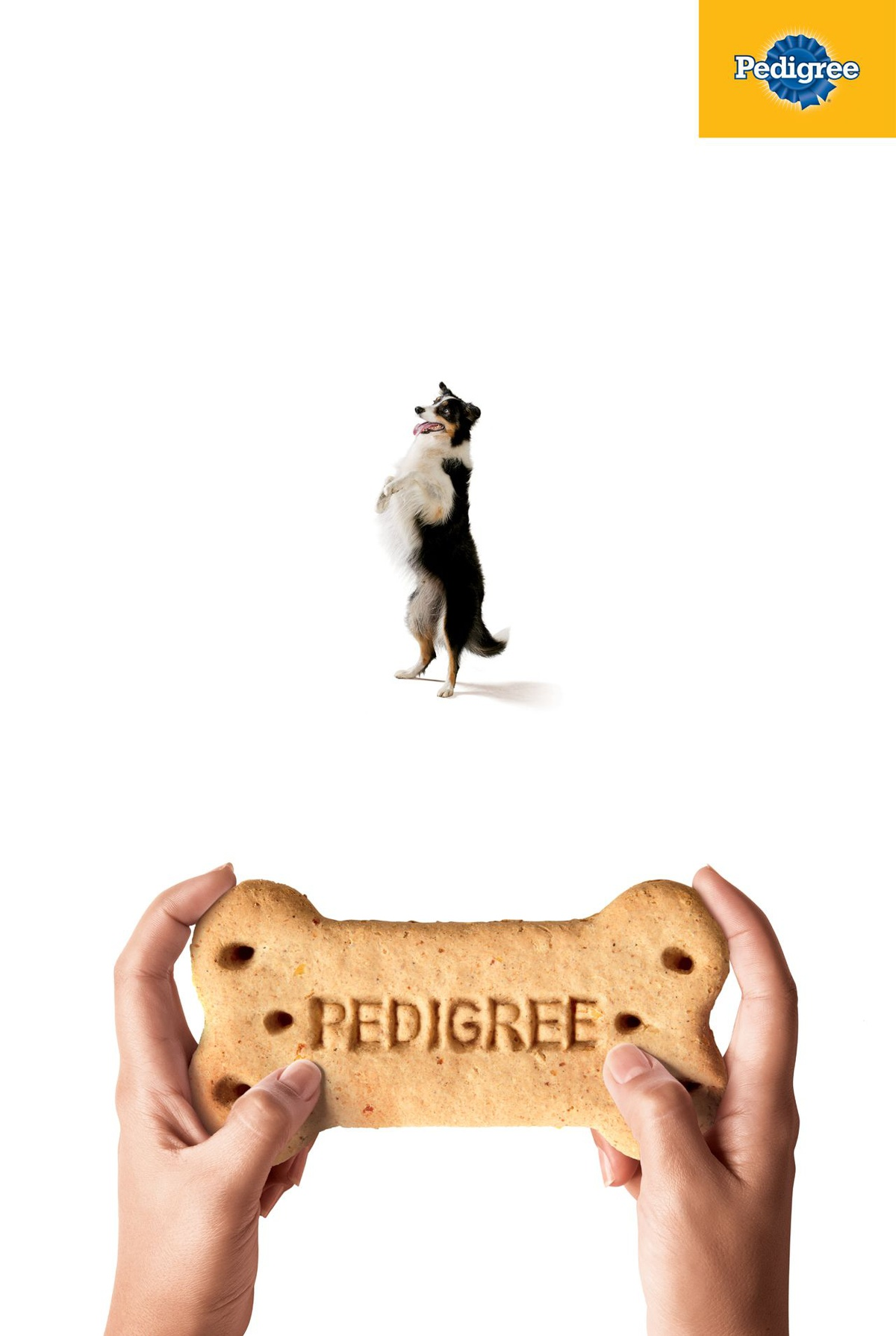 Lürzer's Archive - Print Ad of the Week: Pedigree
